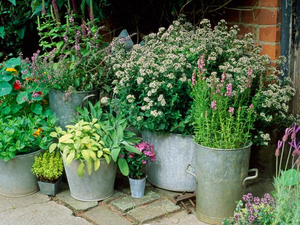 gardening ideas for a small space sunlit spaces