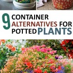 Container Gardening, Gardening Hacks, Gardening Tips and Tricks, Gardening 101, Popular Pin, Potted Plants