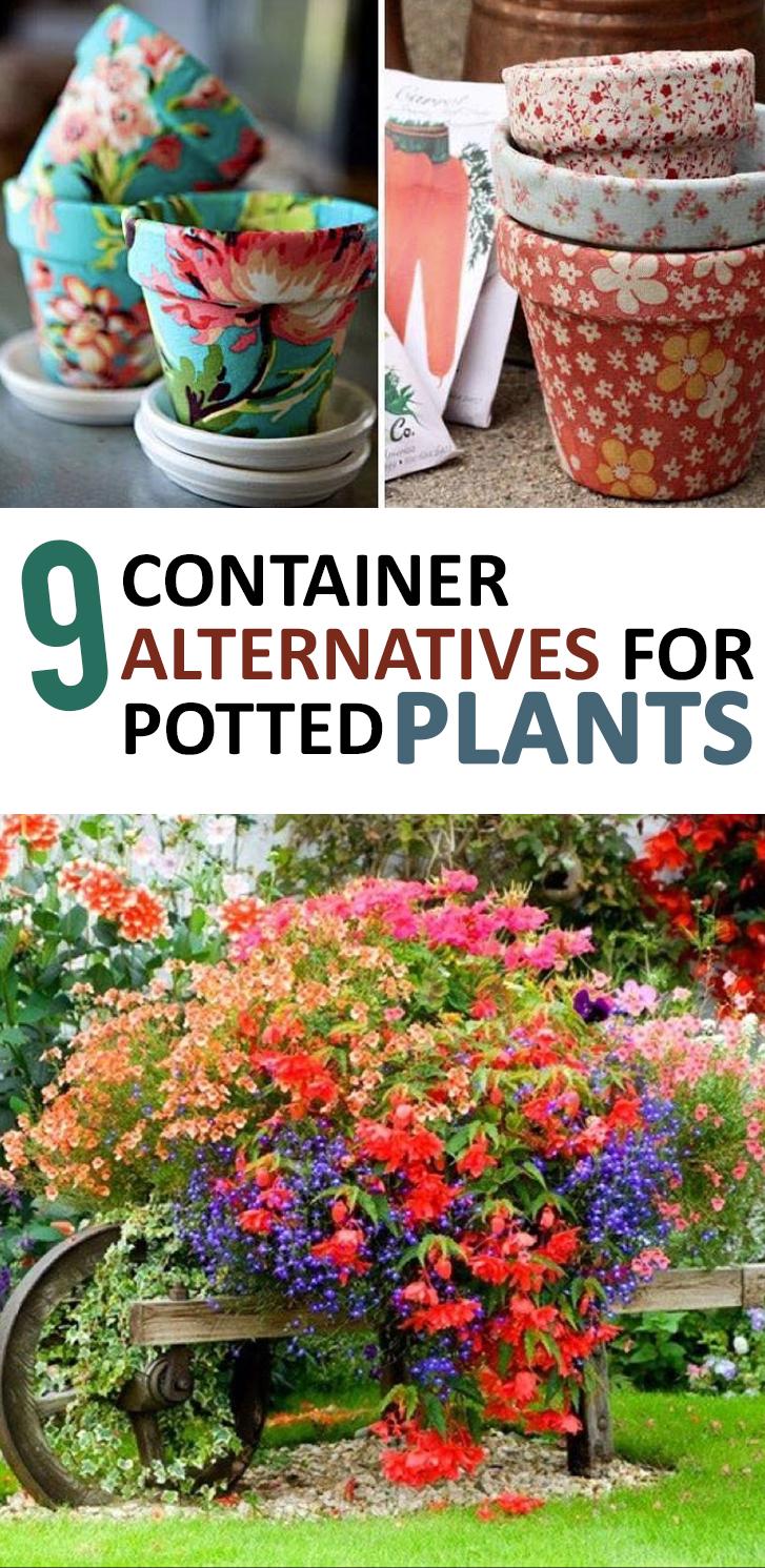 Container Gardening, Gardening Hacks, Gardening Tips and Tricks, Gardening 101, Popular Pin, Potted Plants