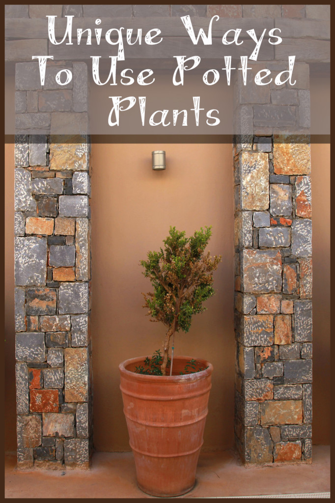 Unique Ways To Use Potted Plants