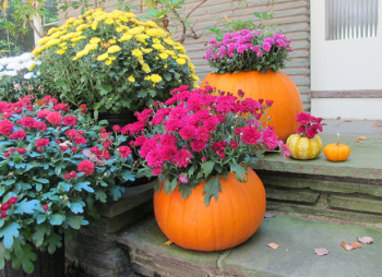 10-no-carve-ways-to-decorate-pumpkins5