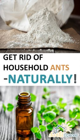 Get Rid of Household Ants–Naturally! GEt Rid of Household Ants, Household Ant Control, Pest Control, DIY Pest Control, Pest Control Hacks, DIY Pest Control, Popular Pin