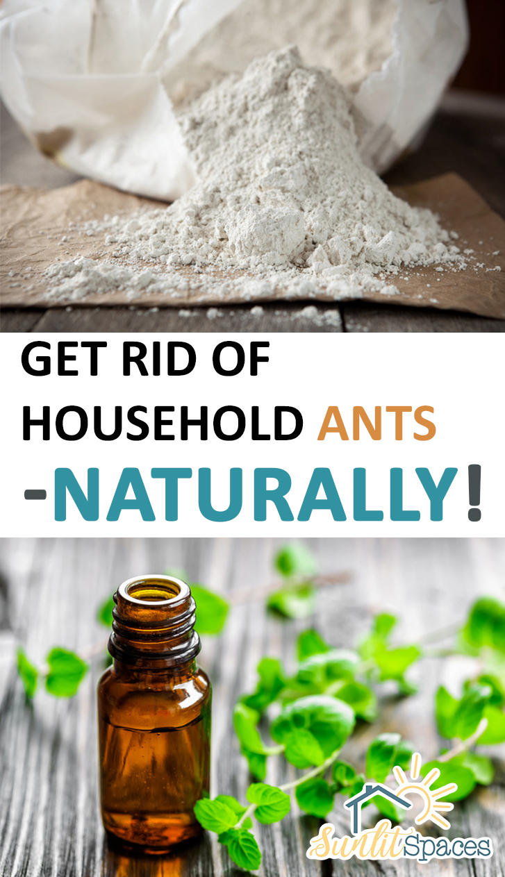 How To Get Rid Of D In Bedroom Get Rid Of Household Ants Naturally